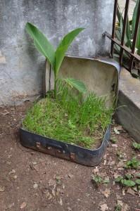 2. Urban Greening (6)
